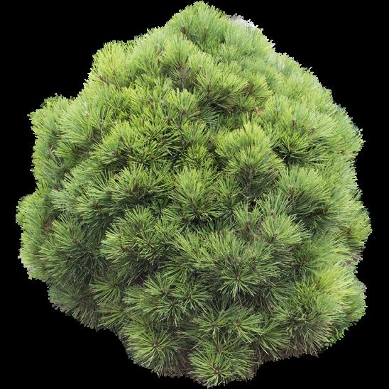 Circle Shaped Bush-SMALL