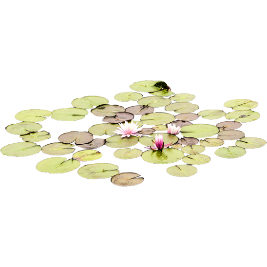 Smallish Lily Pads in water-SMALL