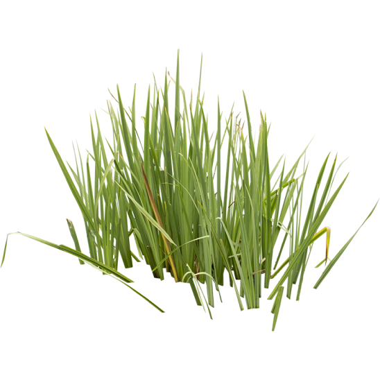 Green Grass in water-SMALL