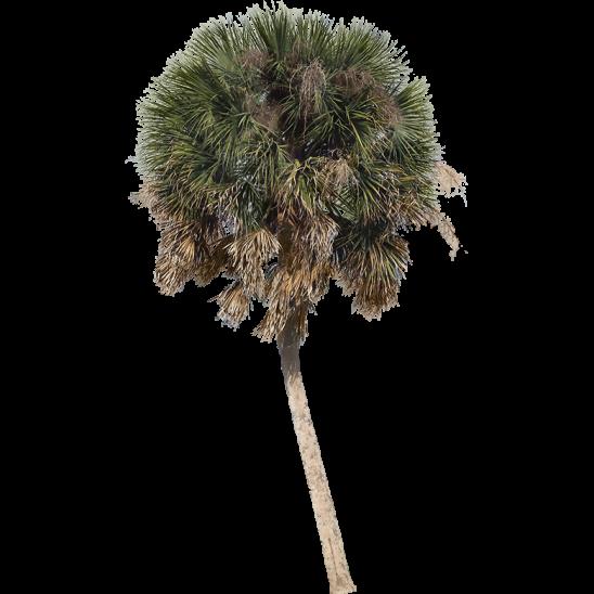 Palm Tree 09-SMALL