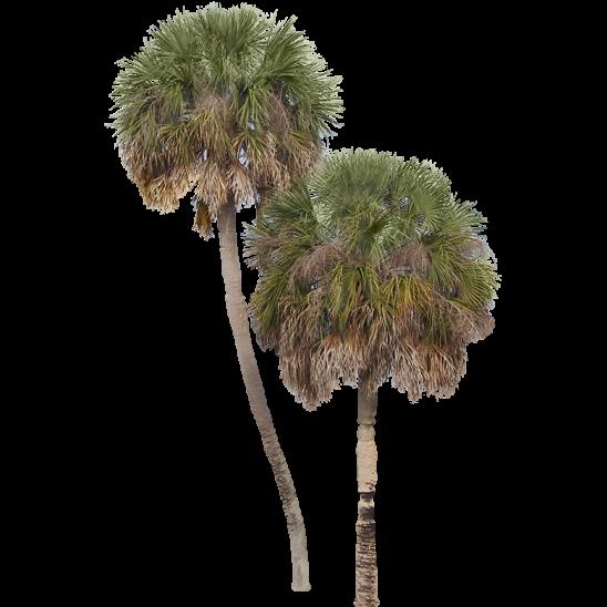 Palm Tree 11-SMALL