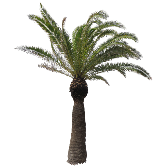 Palm tree 12-SMALL