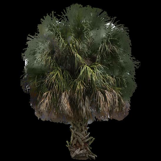 Palm tree 13-SMALL