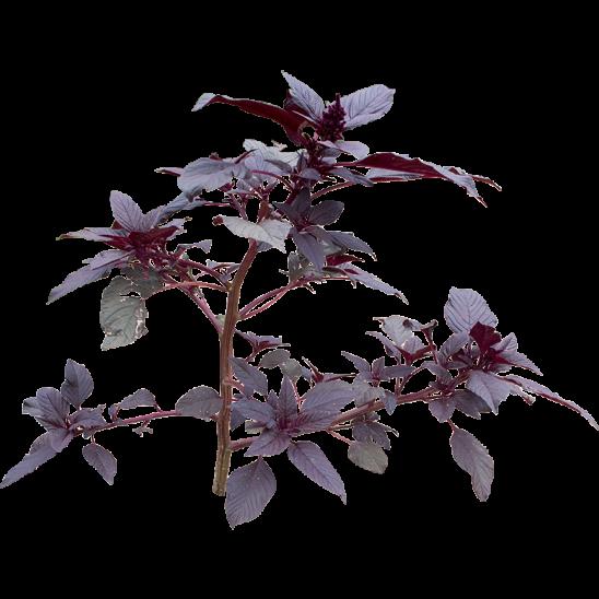Purple Plant-SMALL